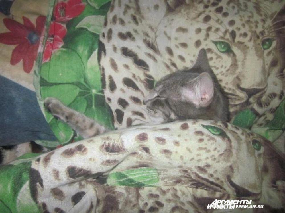 Участник №9. Кот Пушок любит поспать