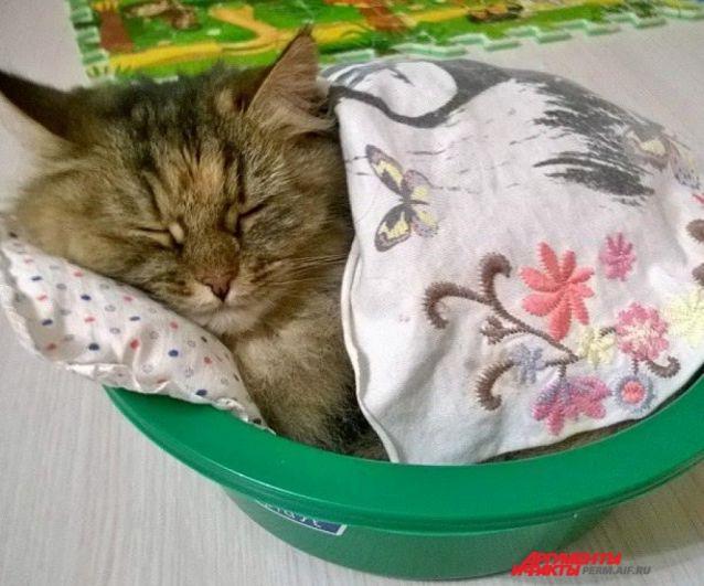 Учакстник № 20. Кошка Маруся