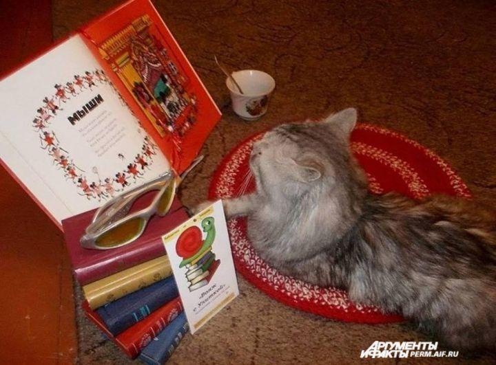 Участник № 6. «Читательские предпочтения кота Васьки»