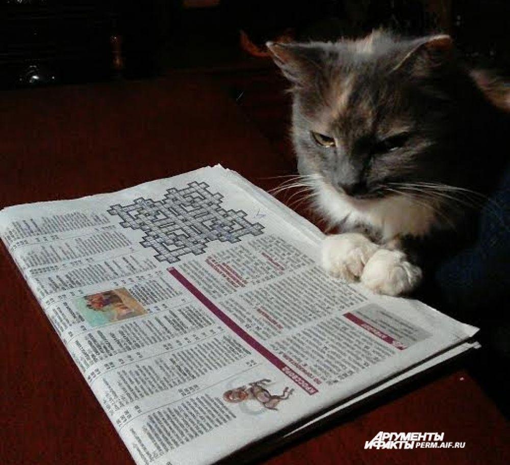 Кот Стеша