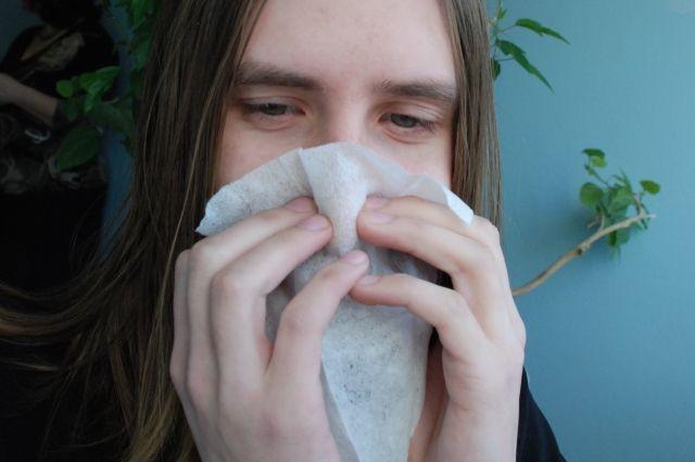 ВПерми установили «ловушку» для пыльцы
