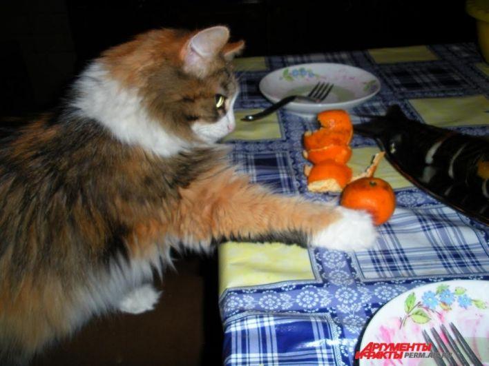 Участник № 22. Кошка Леля: «После праздничка в четверг мандарин лишь на обед!»