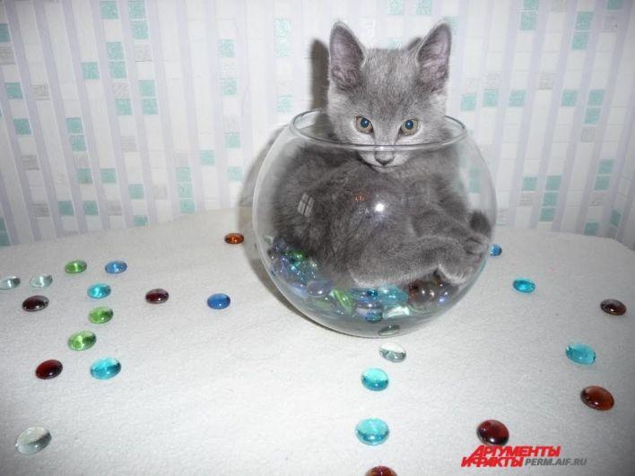 Участник № 33. Кошка Плюшка