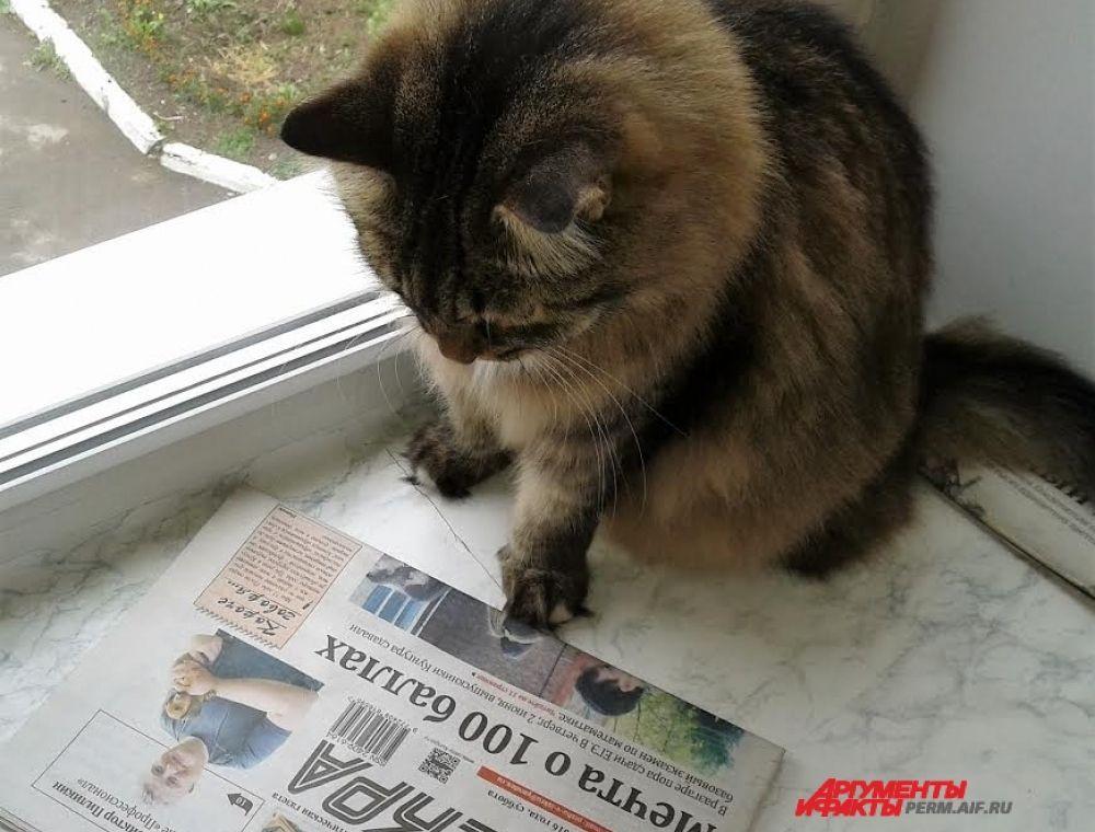 Участник № 18. Кот Русик любит читать газету. Но на этот раз он недоумевает, почему на фото в газете ветеринар  опять со щенком?