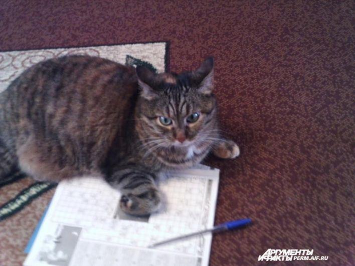 Участник № 14. Кошка Дуся любит перелистывать книги, журналы, да и деловые бумаги