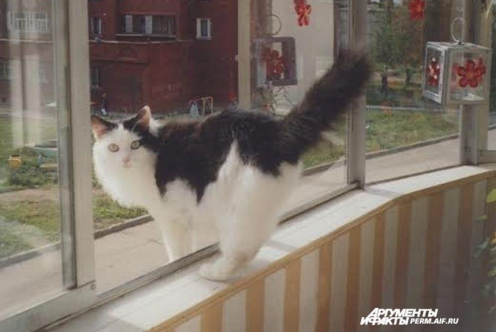 """Участник № 26. Хозяйка Татьяна: 43.«Барсик - мой любимый кот,  Он давно уже живет.  Хоть ему немало лет,  Шлет всем кошечкам привет.  Хвост трубой. глаза горят,  Любит взрослых и ребят.  Выйдет на балкон гулять,  Свежим воздухом дышать.  Очень любит """"вискас"""" -  Вот такая киска»"""