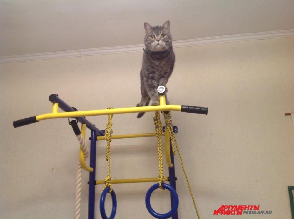 Участник № 19. Хозяин Артём: «Кот Плюша любит забираться на верх и наблюдать оттуда за всеми»