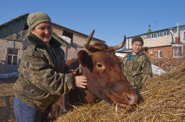 Корову Варю семья Булатбаевых купила на средства областного бюджета.