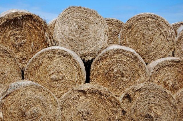 В Соль-Илецком округе 70-летняя пенсионерка погибла, упав со стога сена