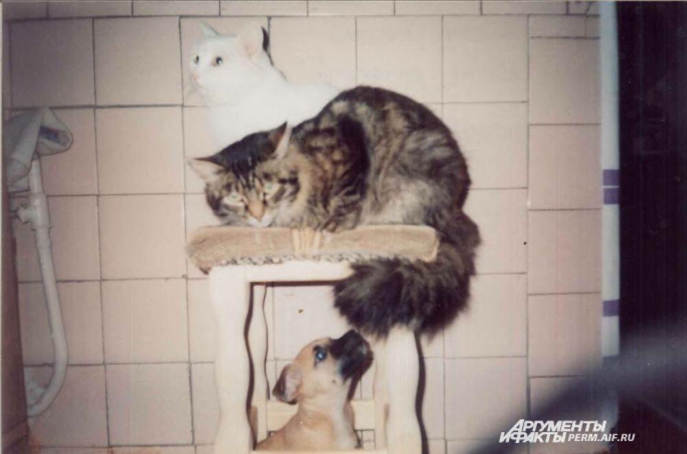 Участник № 19. Пёс Феня: «И меня пустите!»