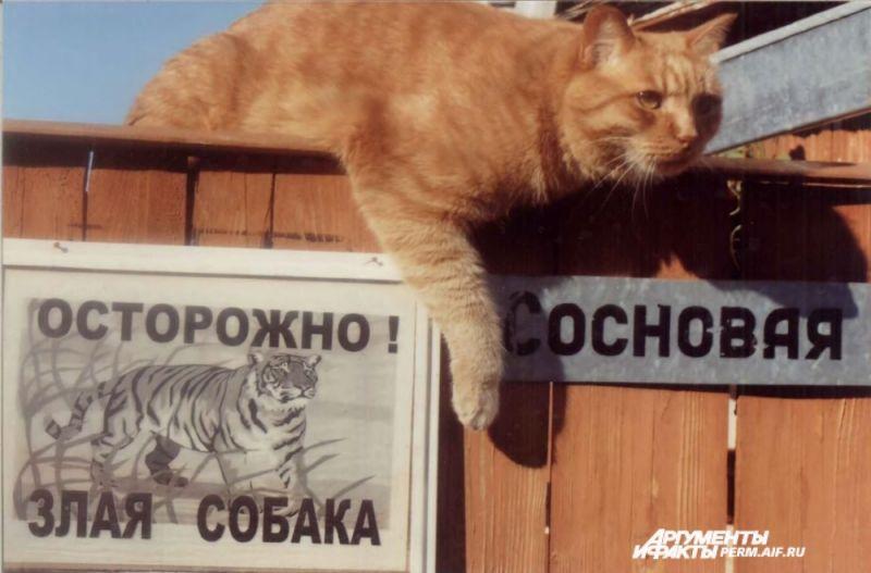 Участник № 45. Кот Персик в дозоре.