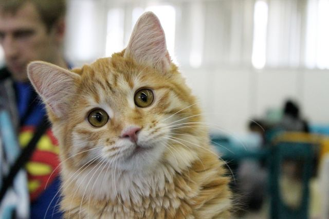 На Тайване запретили есть кошек и собак