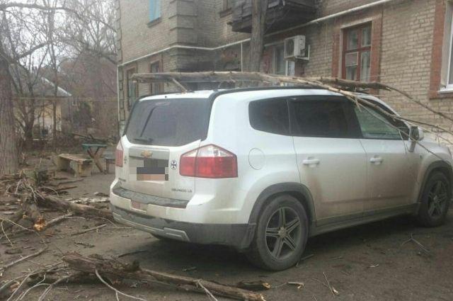 Граждан Ставрополя призывают сообщать об рискованных деревьях вмэрию
