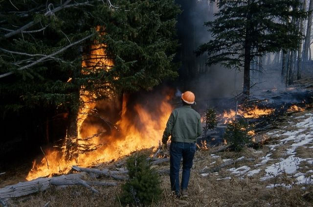 Снег еще не везде успел сойти, а огонь уже охватывает территории.