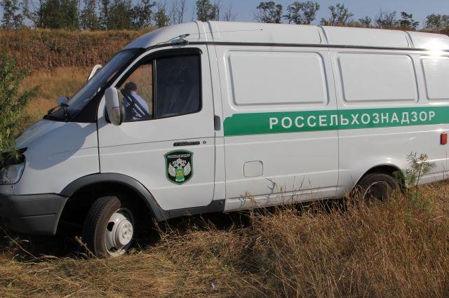 Специалисты Россельхознадзора обнаружили опасные бобы.