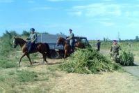 В Тюменской области казачество развивается с большим успехом