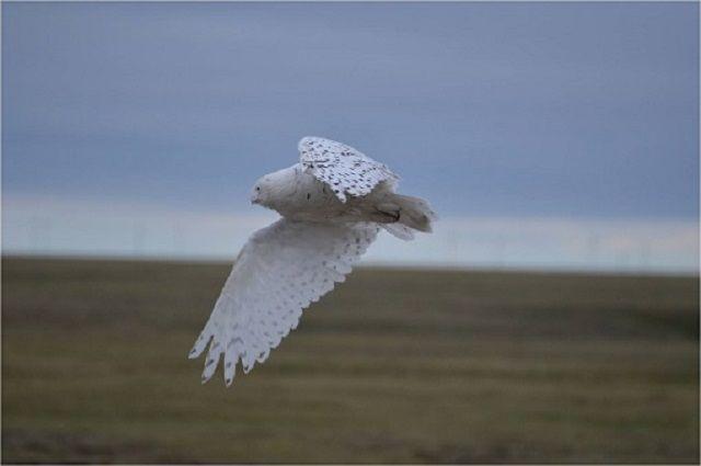 В Салехарде молодежь осуждает экологическую безопасность в Арктике.