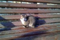 На Пасху кузбассовцев ожидает теплая погода.