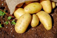 Больница просит не только картофель, но и другие овощи, а также соленья.
