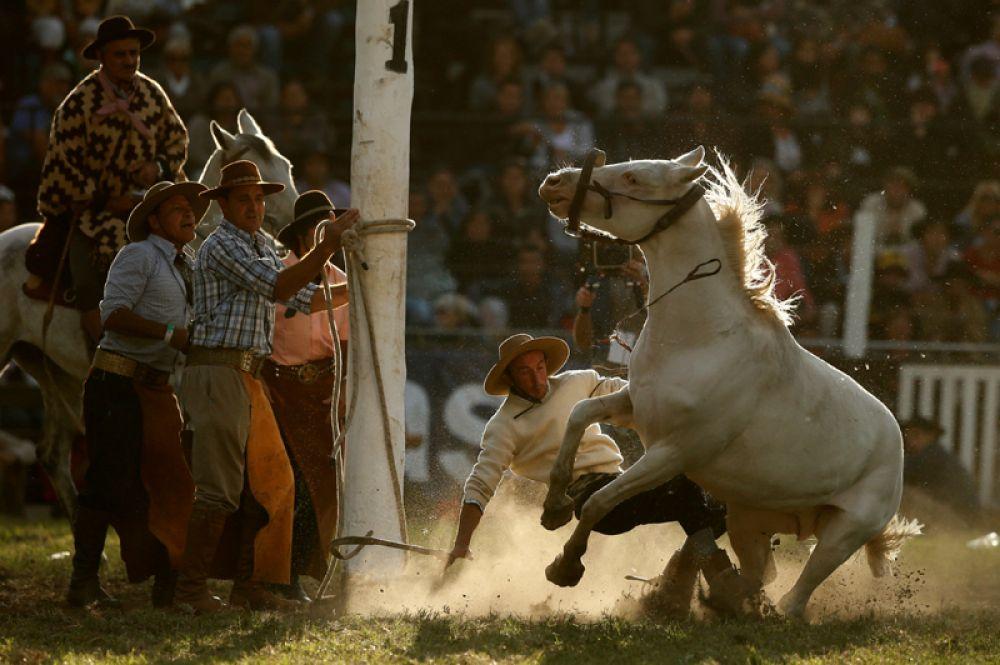 12 апреля. Перед Пасхой в столице Уругвая прошел традиционный родео-фестиваль под названием Креольская неделя.