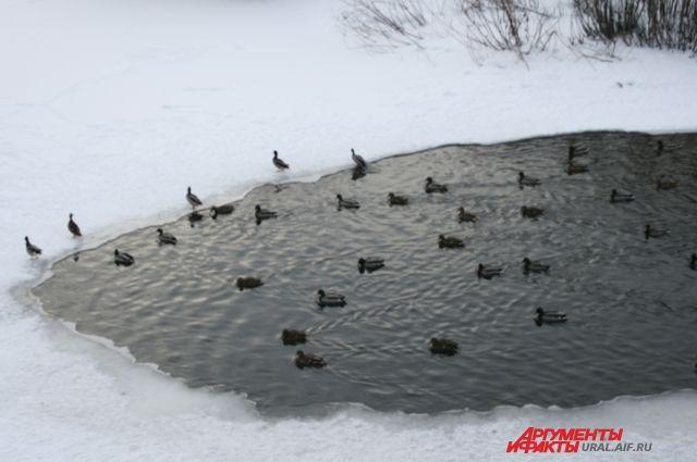 Смольный просят сообщать оперелетных птицах, оставшихся без еды из-за снегопада