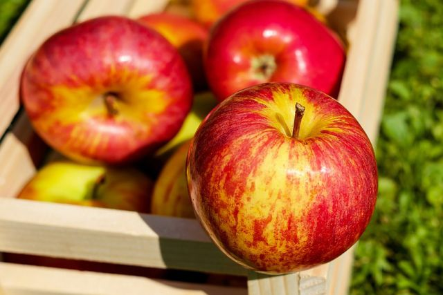 Накировской базе уничтожили 120кг санкционных яблок