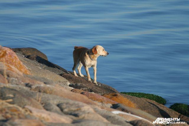 В Калининграде очевидцы спасли выброшенную в воду собаку.