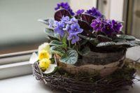 Даже традиционные домашние цветы можно красиво оформить.