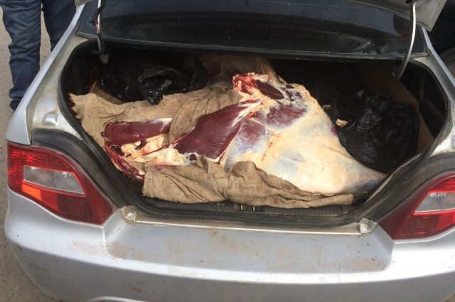 Мясо перевозили в грязном салоне и багажнике автомобиля.