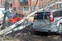 В Тюмени рухнувшая от ветра берёза оборвала провода и помяла три машины