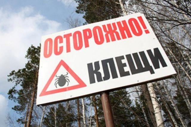 В Кузбассе клещи покусали 17 человек.