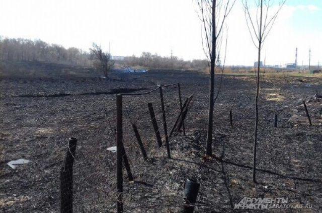 ВПриморье ссамого начала года произошёл 231 лесной пожар