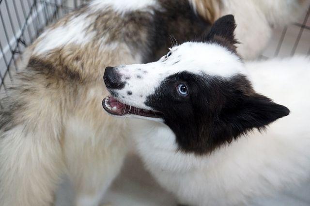 Зоозащитники должны представить чеки на лечение животных и другие документы.