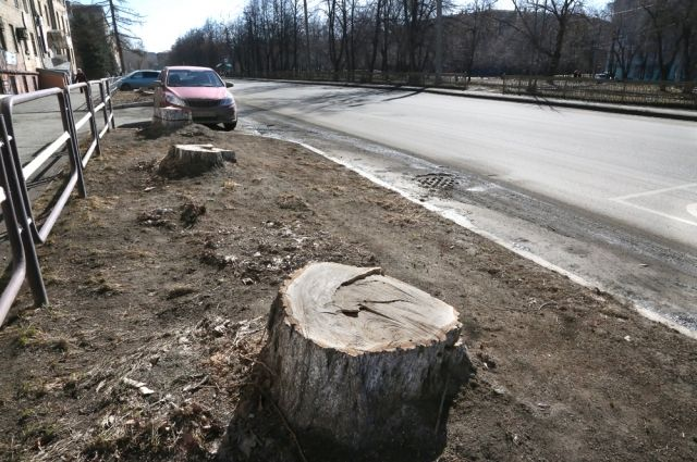 Жители домов на улицах Богдана Хмельницкого и Дегтярёва недосчитались больше 70 деревьев. От них остались одни пеньки.
