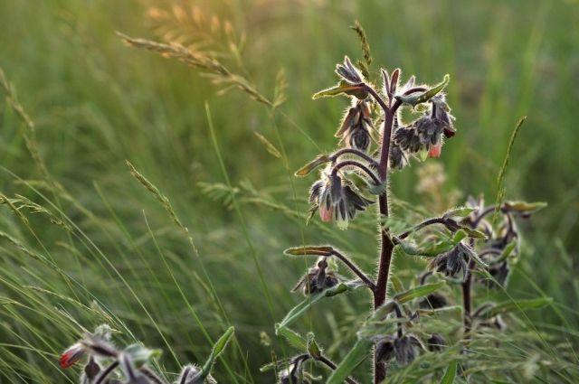 Какие только насекомые ни встречаются в оренбургских степях.