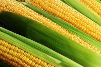 В ходе исследования каждые четыре года исследователи Гарварда анализировали дневник питания свыше 13 тысяч человек