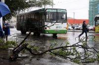 Сильный ветер валил деревья и сносил рекламные конструкции.