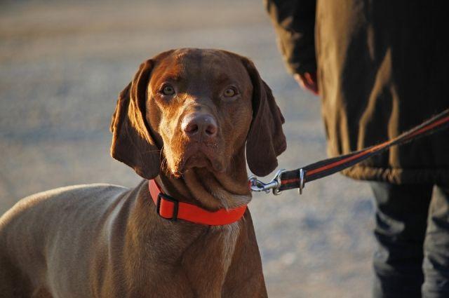 Сейчас штраф за ненадлежащий выгул собак составляет от 500 до 1000 рублей