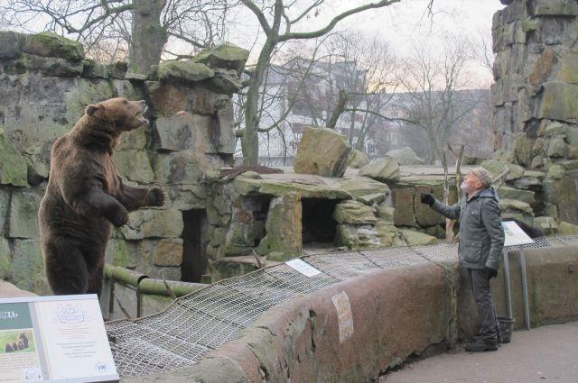 Николай Дроздов в зоопарке Калининграда общается с медведем.
