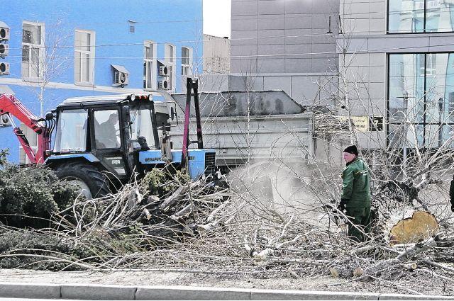 Деревья с части проспекта Ленина убрали «подчистую».