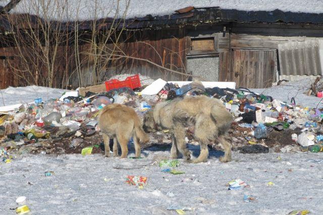 Фото с сайта: экоконтроль.рф
