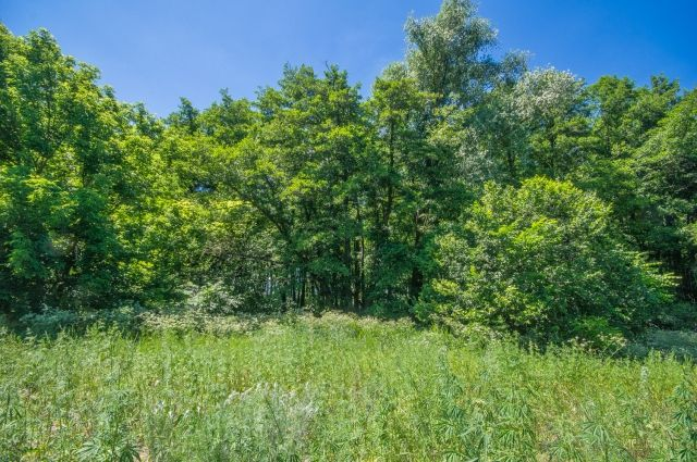 Омский экс-чиновник займётся лесами.