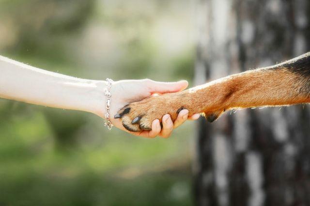 ВБразилии собачка стала работником месяца на здешней заправке