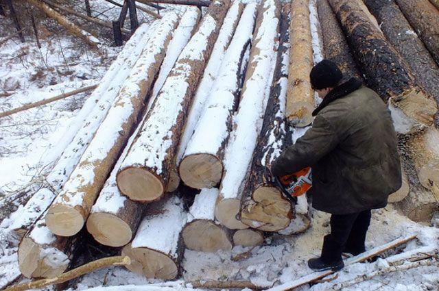 Расследование дела окоррупции всфере лесозаготовки вШенкурском районе окончено