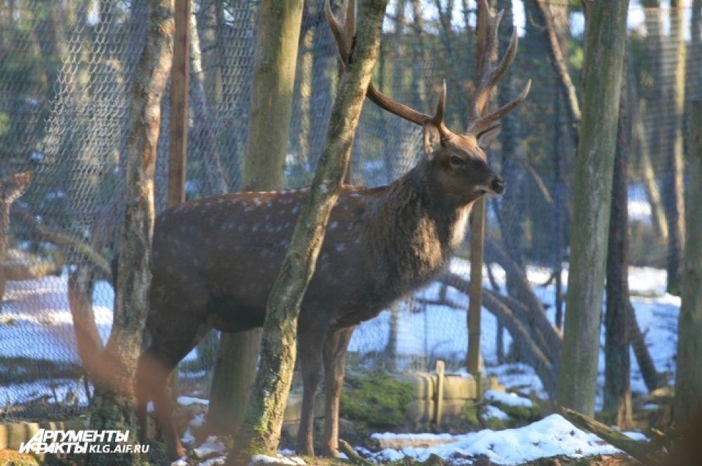 Посетители нацпарка могут встретить в лесу кабана, косулю, лису, енотовидную собаку и даже лося.