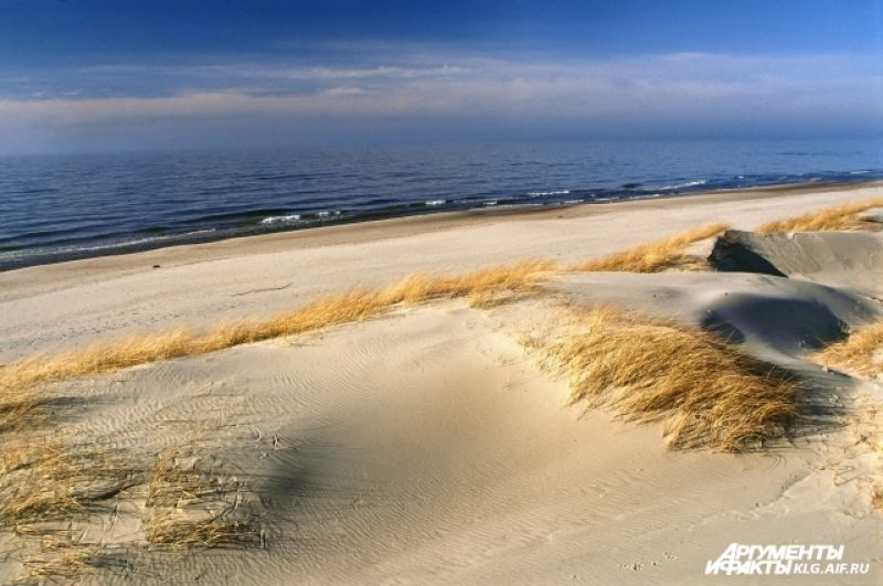 В настоящее время на Куршской косе господствуют пески и леса. Восемь маленьких поселений у Куршского залива (три - на российской стороне и пять - на литовской стороне) составляют лишь 3% всей пощади косы.
