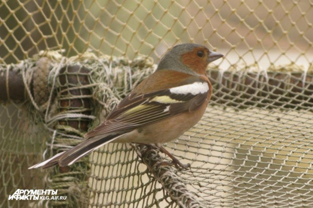 Осенью и весной над национальным парком «Куршская коса» пролетают миллионы птиц.