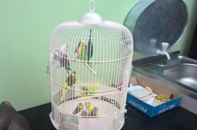 Калининградец спрятал в наволочке 11 попугаев, чтобы вывезти их в Польшу.