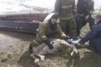 Для спасения животного пожарные провели специальную операцию.