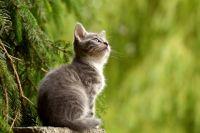 Читатели прсилали нам 250 фотогграфий своих животных